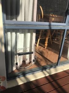 cat-door-window
